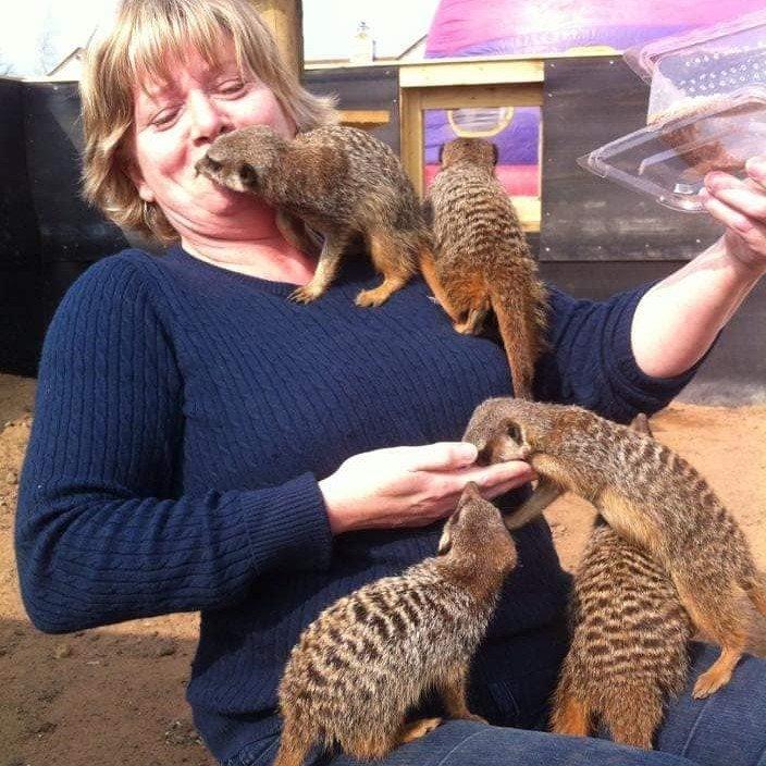 mobed by meerkats